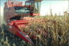 thumb_agriculture_corn_harvester