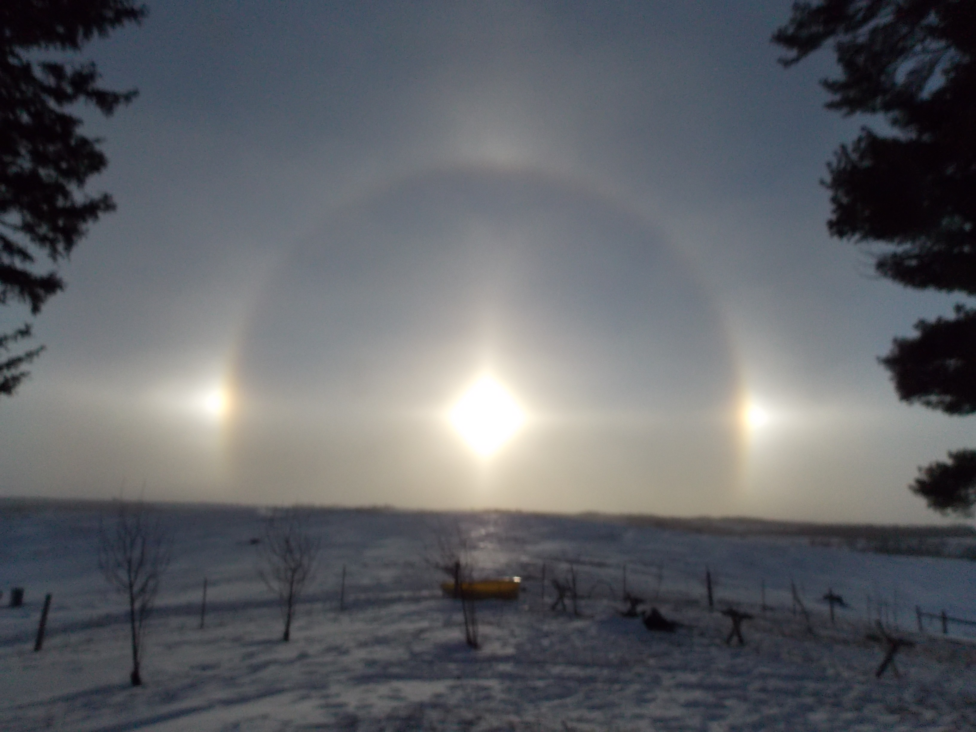 Sun Dogs and Stuck Calves
