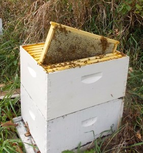 Learn Beekeeping